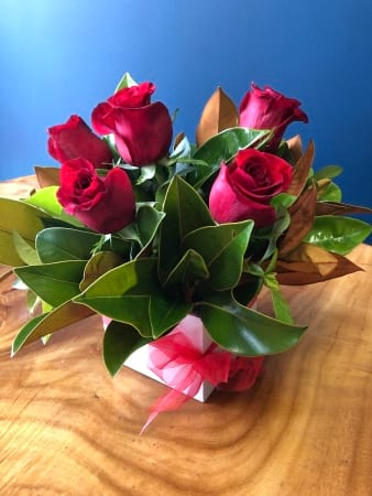 Red Roses|Valentines Day|Half a Dozen Red Roses| Delivery to Medowie, Tanilba Bay, Salt Ash, Fern Bay, Lemon Tree Passage, Soldiers Point, Salamander,  Nelson Bay, Shoal Bay, Fingal Bay